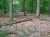 Totes Holz, hier eine alte Eiche, gehört im Wald zum Lebenskreislauf.