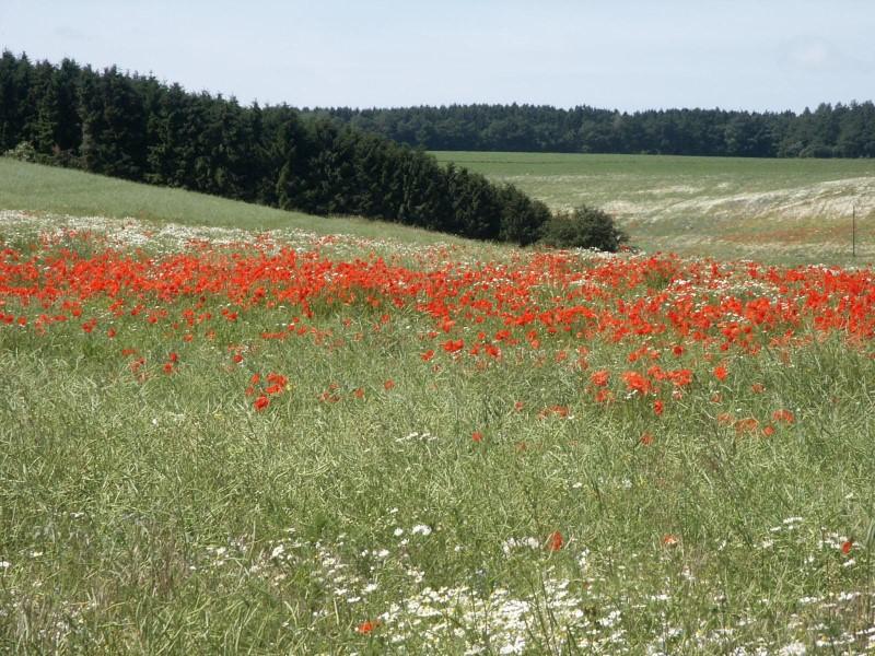 Wiesenlandschaft im Hunsrück