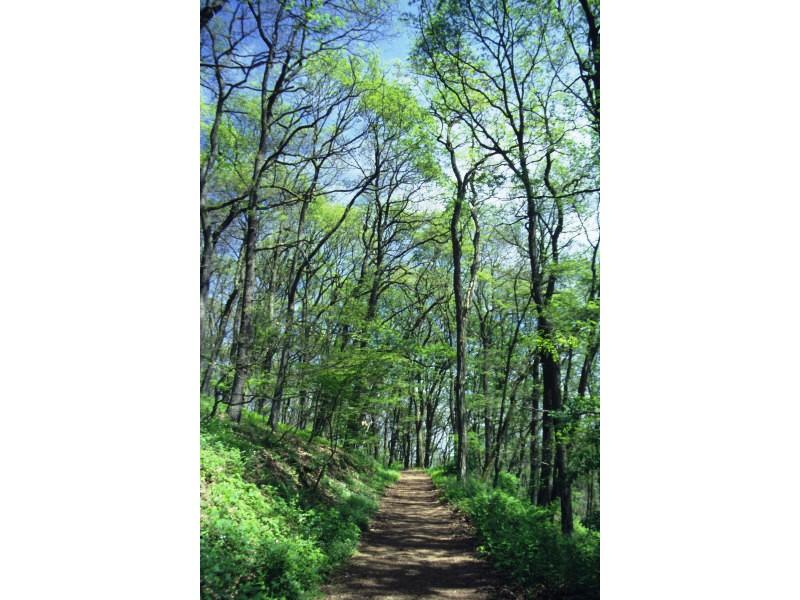 Wanderweg im Baybachtal